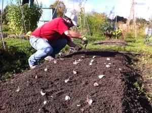 Planting Garlic.